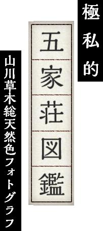 極私的 五家荘図鑑 山川草木総天然色フォトグラフ